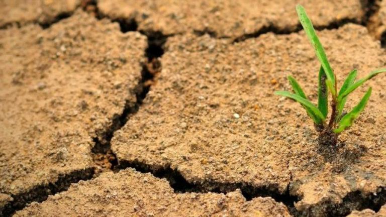 Деградация земель в Центральной Азии: оценка
