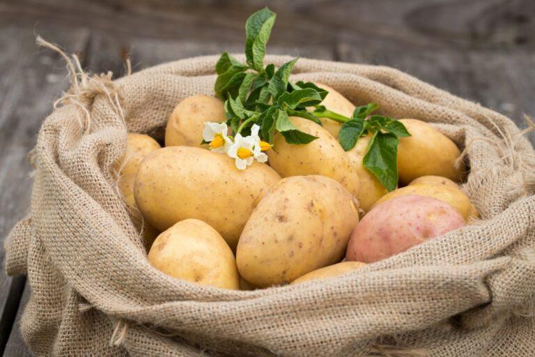 Картофель – чем обусловлены высокие цены и можно ли их снизить в будущем?
