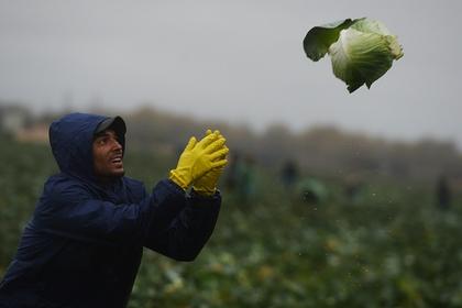 В России оказалось некем заменить мигрантов для работ в поле