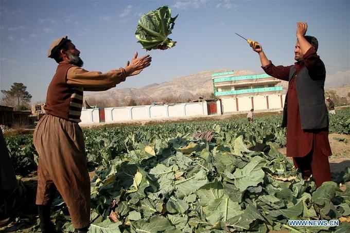 Как устроена экономика Афганистана и что туда поставляет Узбекистан